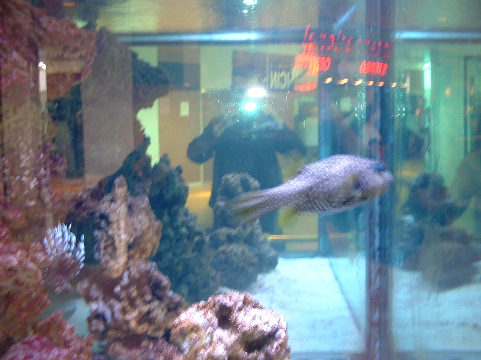 Fish aquarium edmonton - Fish Aquarium Edmonton